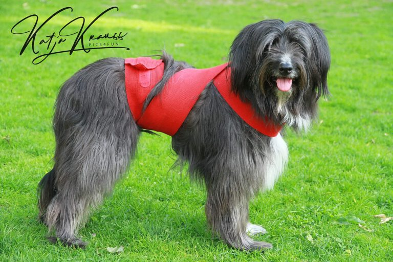 Hundeschule-GREH-22ttouchn_0P2A0004