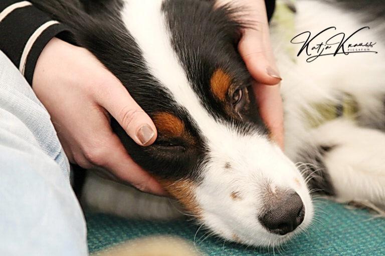 Hundeschule-GREH-22ttouchn_2015-01-31 Bethe WK14 Gesichter 013