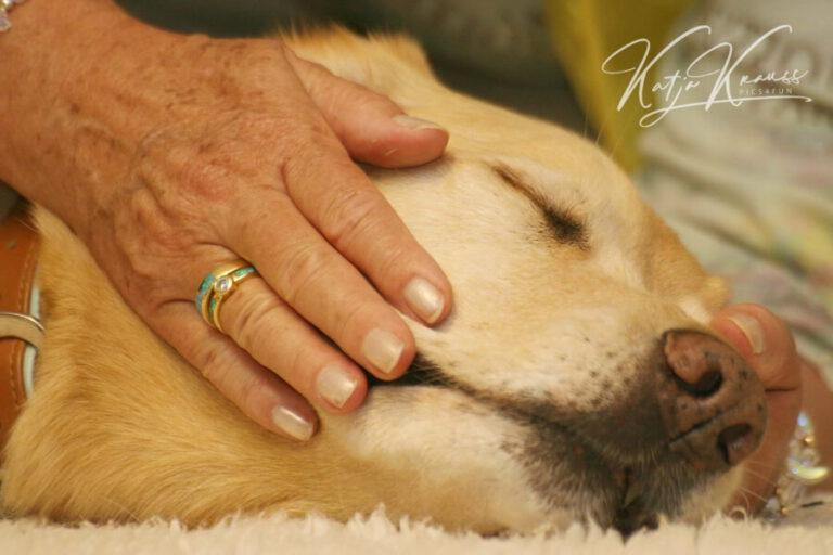 ttouch®-n-click Trainerausbildung - Hundeschule GREH