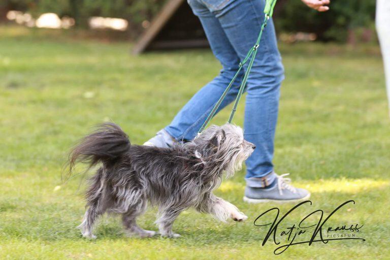 Hundeschule-GREH-24HFIB_0E6A9531