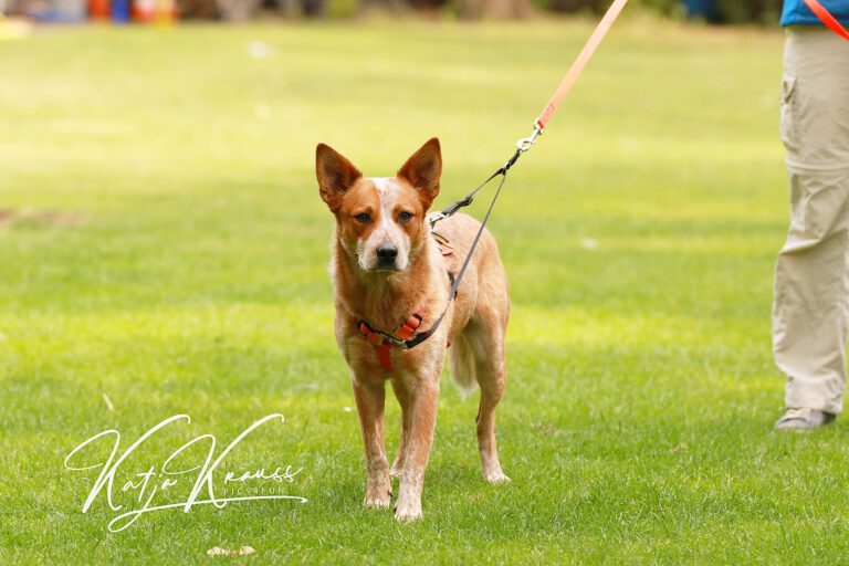 Hundeschule-GREH-24HFIB_0E6A9762