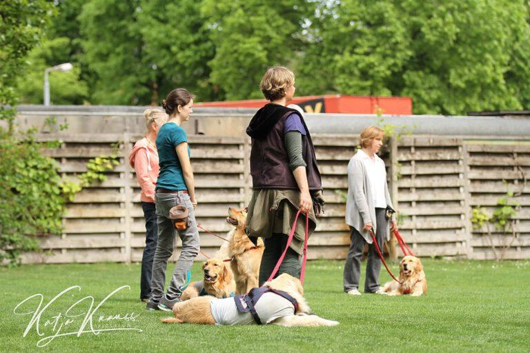 Hundeschule-GREH-24HFIB_IMG_0001