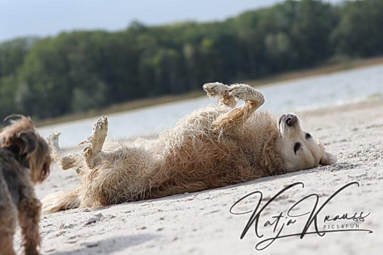 Hundeschule-GREH-25LA_0E6A0002