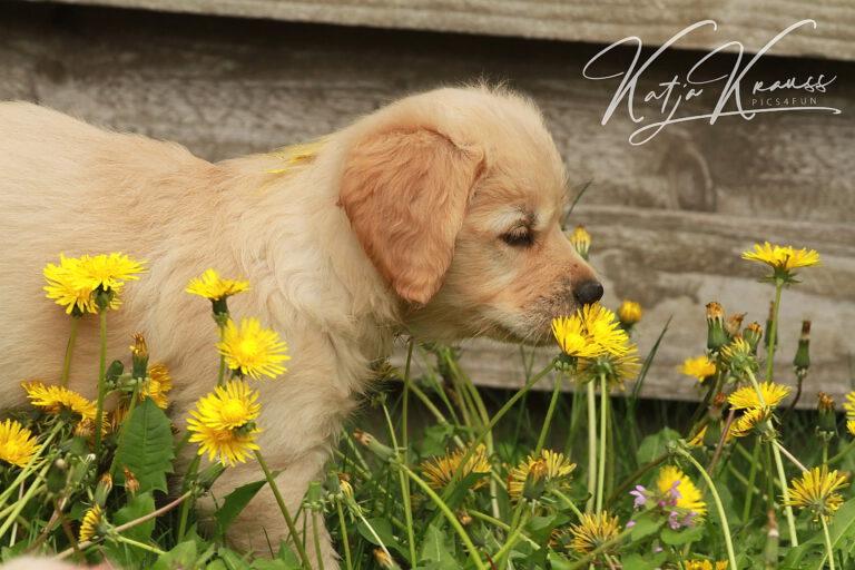 Hundeschule-GREH-25LA_0E6A0005