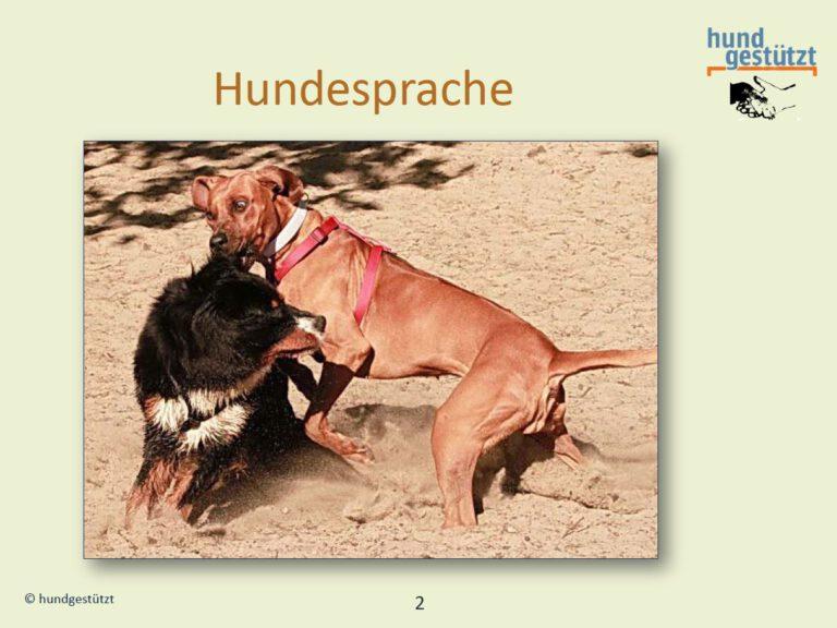 Hundeschule-GREH-26Web_Folie Bedürfnisse005
