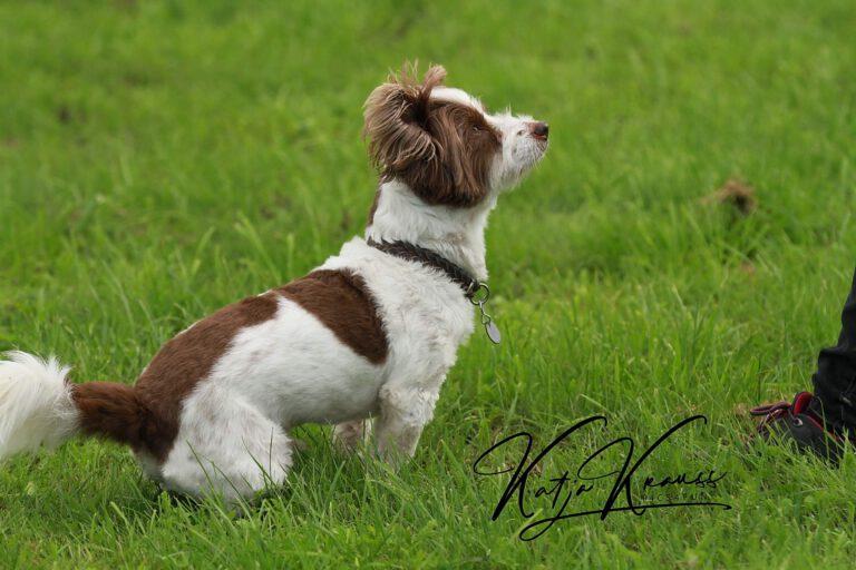 Hundeschule-GREH-27ToS_0E6A0003