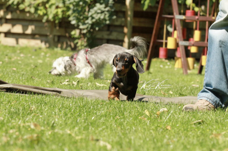 Hundeschule-GREH-29Termik_IMG_0035
