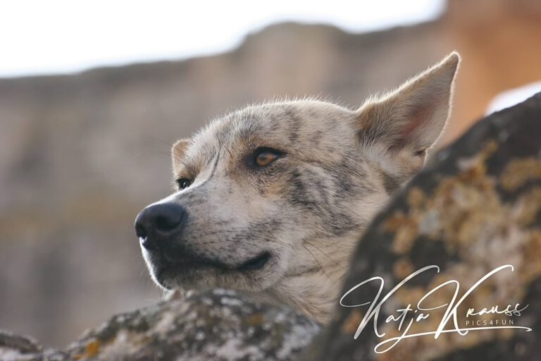Hundeschule-GREH-29Termik_IMG_8746