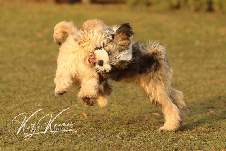 Hundeschule-GREH-2Ange_0E6A0001