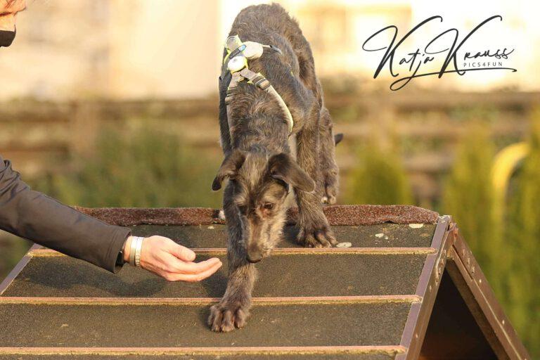 Hundeschule-GREH-2Ange_0E6A0002