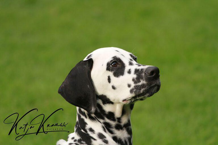 Hundeschule-GREH-2Ange_0E6A0004