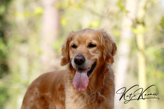 Hundeschule-GREH-2Ange_0P2A5506