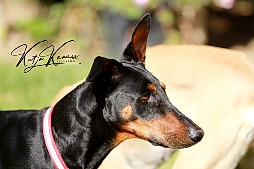 Hundeschule-GREH-2Ange_IMG_0128