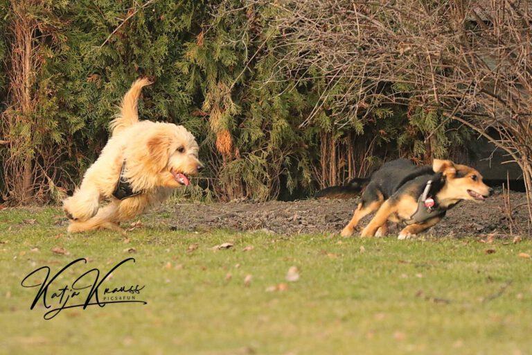 Hundeschule-GREH-30Anm_0E6A0006