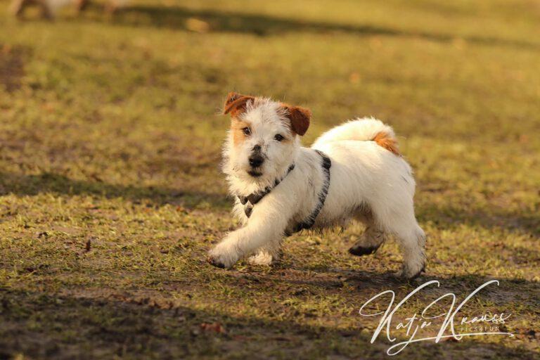 Hundeschule-GREH-30Anm_0E6A2028