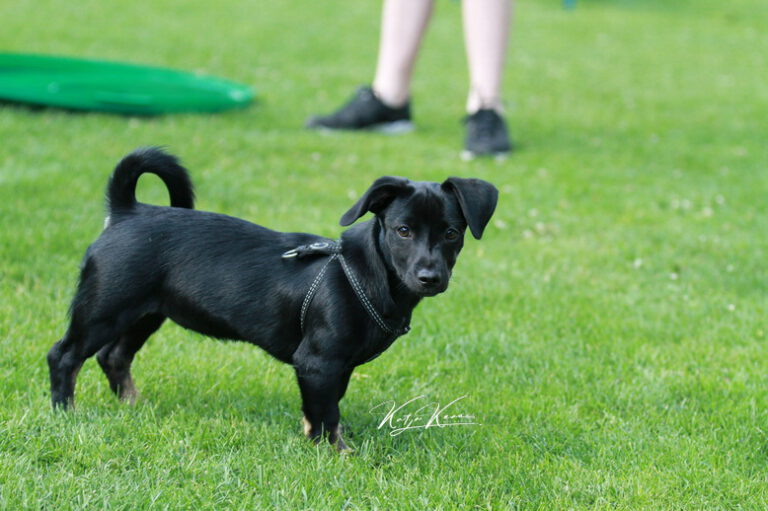 Hundeschule-GREH-30Anm_IMG_0025