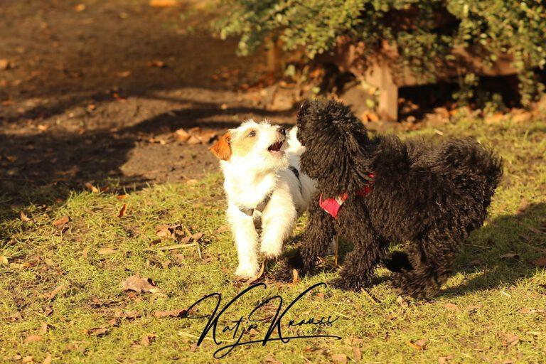 Hundeschule-GREH-31Aktu_0E6A0001