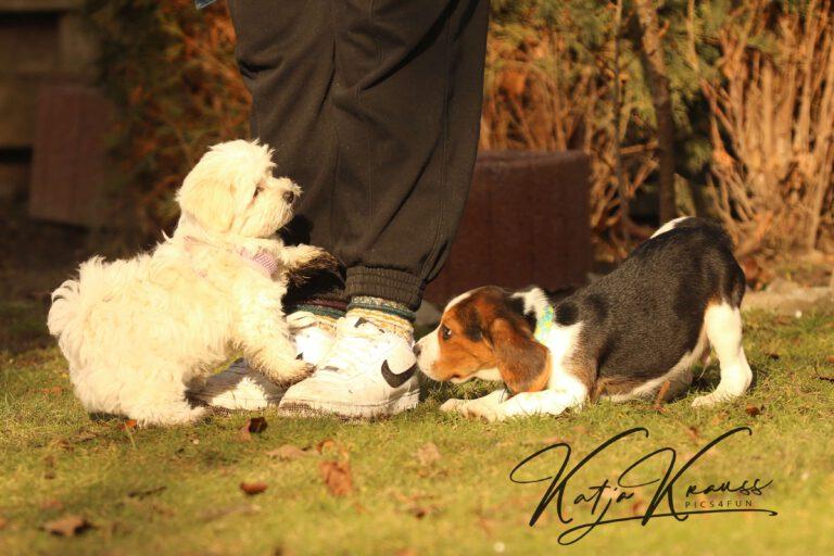 Hundeschule-GREH-31Aktu_0E6A0002