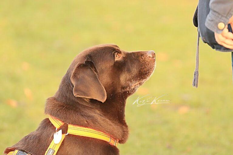 Hundeschule-GREH-32Zus_0E6A0004