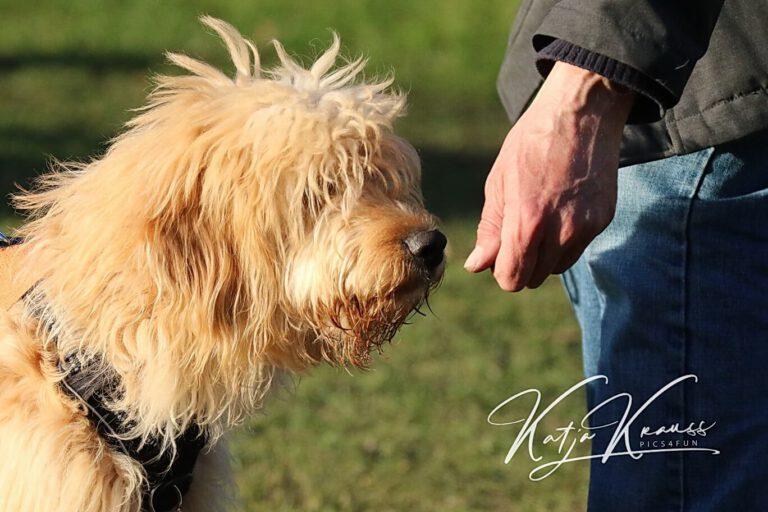 Hundeschule-GREH-32Zus_0E6A7786