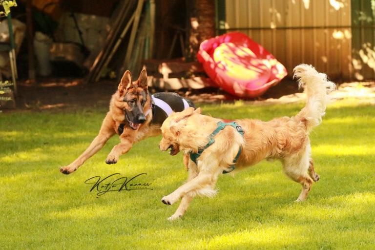 Hundeschule-GREH-32Zus_0E6A8279