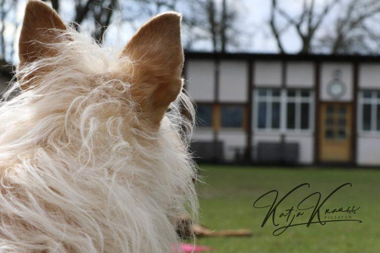 Hundeschule-GREH-33Platz_0E6A7252