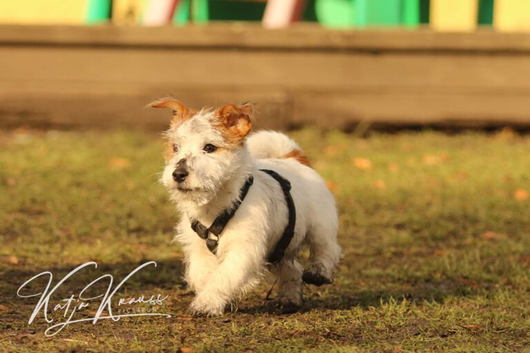 Hundeschule-GREH-34Lage_0E6A0001