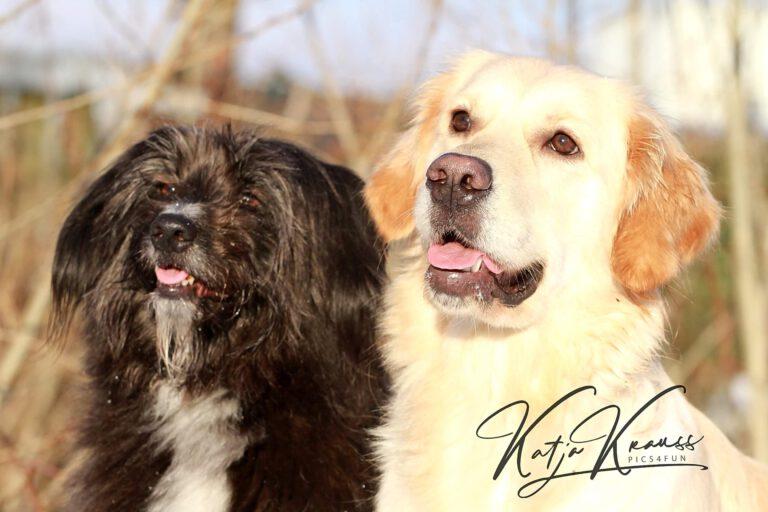 Hundeschule-GREH-34Lage_0E6A0002