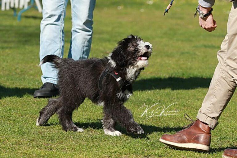 Hundeschule-GREH-34Lage_0E6A0003