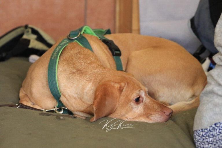 Hundeschule-GREH-34Lage_0E6A0559