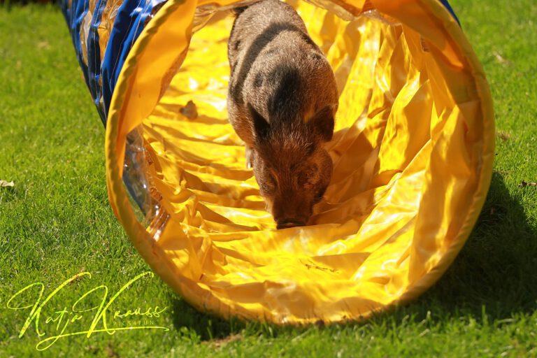 Hundeschule-GREH-35TMit_0E6A0010