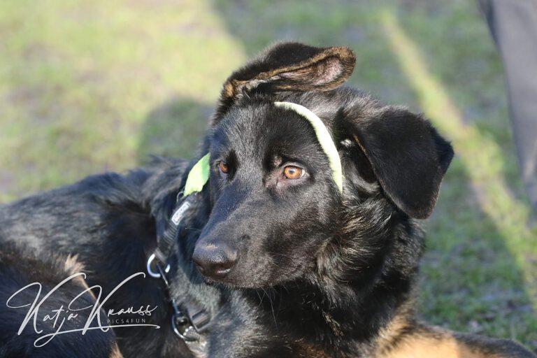 Hundeschule-GREH-36Lit_0E6A7386