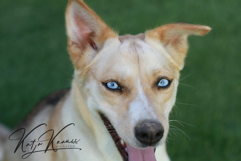 Hundeschule-GREH-36Lit_IMG_0001