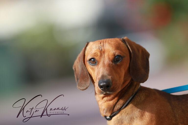 Hundeschule-GREH-36Lit_IMG_0002