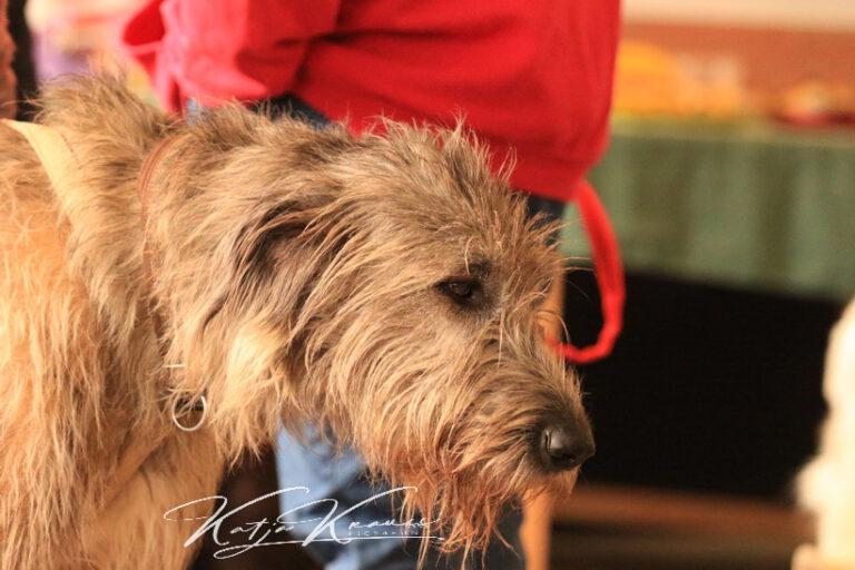 Hundeschule-GREH-37New_0E6A0350
