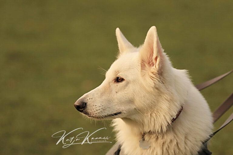 Hundeschule-GREH-37New_0E6A0395