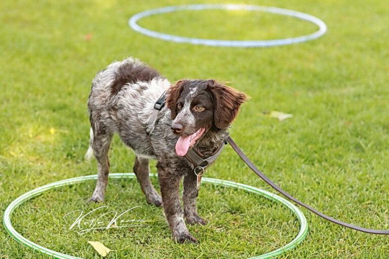 Hundeschule-GREH-37New_0E6A0986