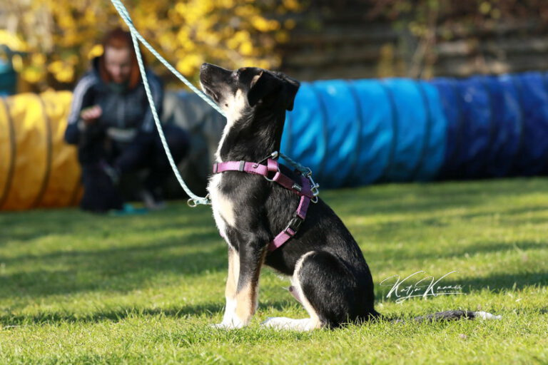 Hundeschule-GREH-37New_0P2A1754