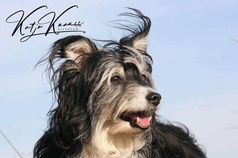 Hundeschule-GREH-38Kont_0P2A0003