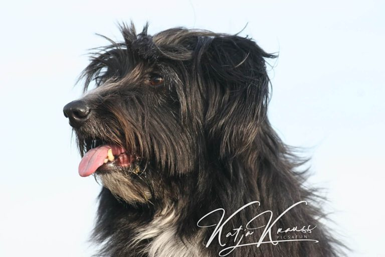 Hundeschule-GREH-38Kont_0P2A0004
