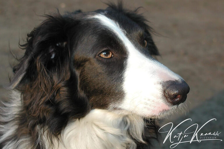 Hundeschule-GREH-38Kont_0P2A0006