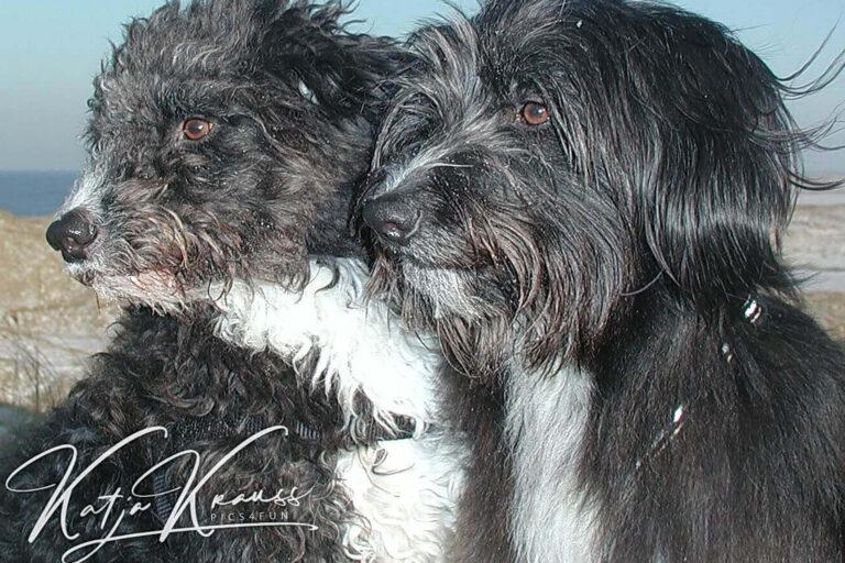 Hundeschule-GREH-38Kont_0P2A0007