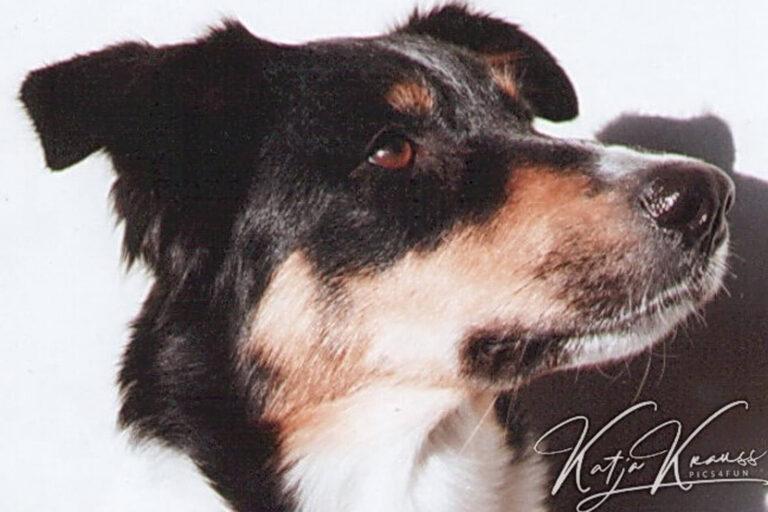 Hundeschule-GREH-38Kont_0P2A0008