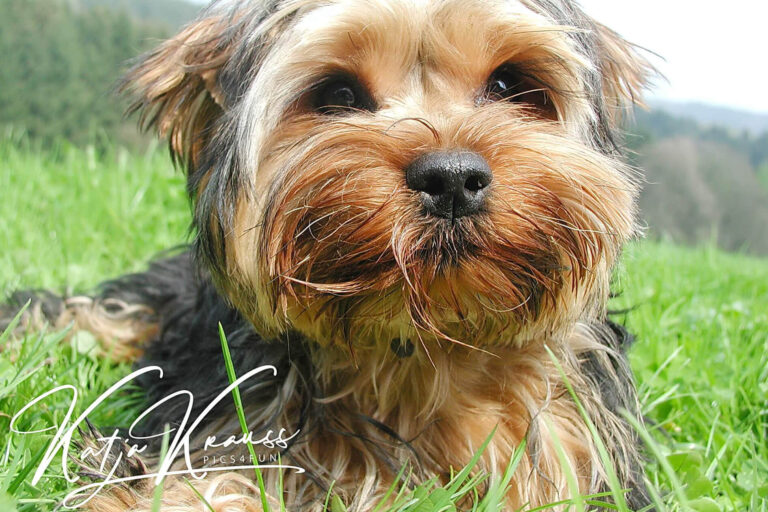 Hundeschule-GREH-38Kont_0P2A0009