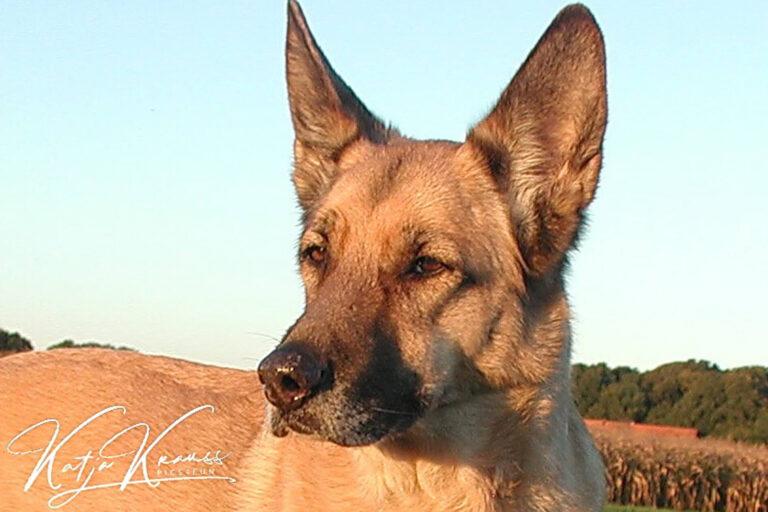 Hundeschule-GREH-38Kont_PA060072