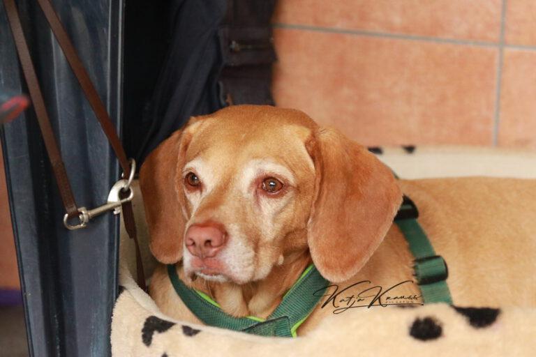 Hundeschule-GREH-39Impr_01