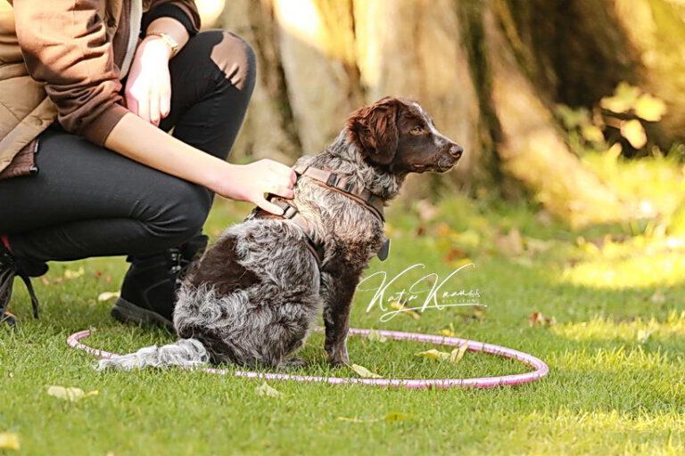 Hundeschule-GREH-39Impr_02
