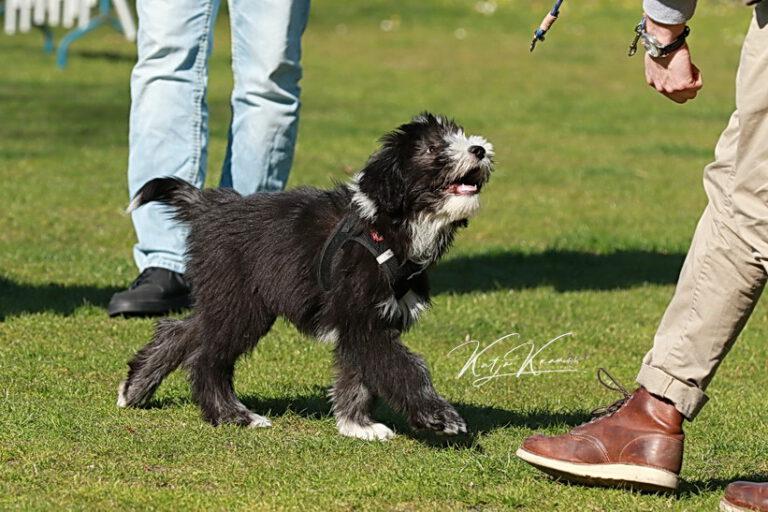 Hundeschule-GREH-39Impr_0P2A0803