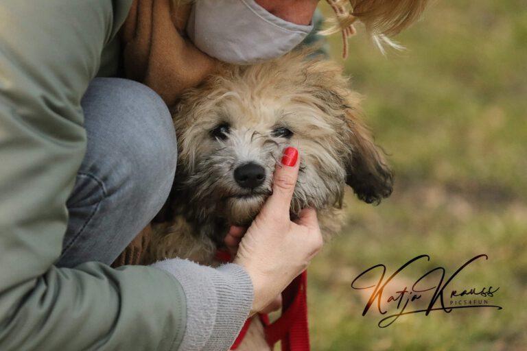 Hundeschule-GREH-3Welp_0E6A0002