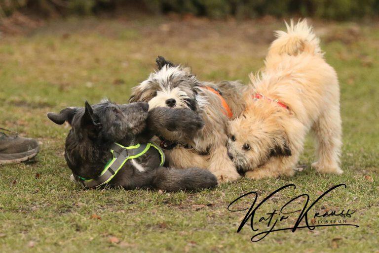 Hundeschule-GREH-3Welp_0E6A0003
